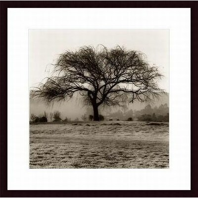 Printfinders 'Willow Tree' by Alan Blaustein Framed Photographic Print