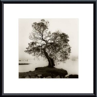 Printfinders 'Coast Oak Tree' by Alan Blaustein Framed Photographic Print