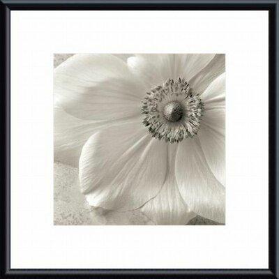 Printfinders Poppy Study II by Sondra Wampler Framed Photographic Print
