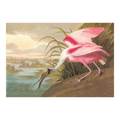 Buyenlarge Roseate Spoonbill by John James Audubon Painting Print
