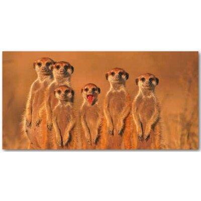 Artland Wandbild Erdmännchen Familie