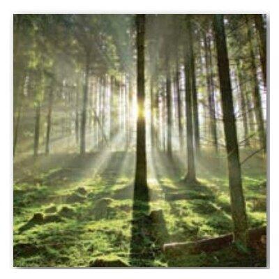 Artland Wandbild Wald im Gegenlicht von Körner, Hubert