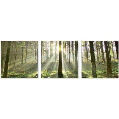 Artland 3-tlg. Leinwandbild-Set Fotodruck von Körner, Hubert