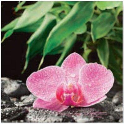 Artland Wandbild Orchidee auf schwarzen Zen Steinen von scorpp