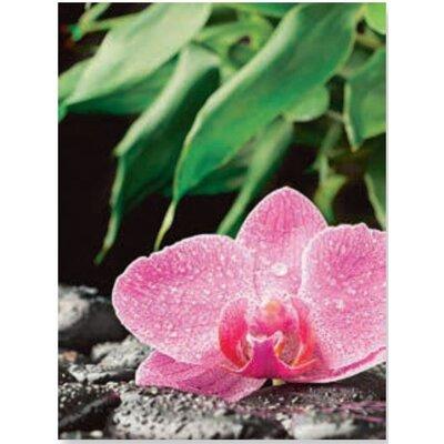 Artland Wandbild Orchidee auf schwarzen Zen Steinen von scorpp - 80 x 60 cm
