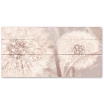 Artland Glasbild Pusteblume Fotodruck von Riweda in Sepia