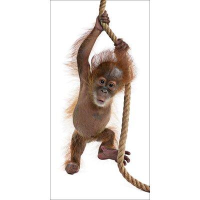 Artland Leinwandbild Baby Sumatra Orang-Utan an Seil von Isselèe, Eric