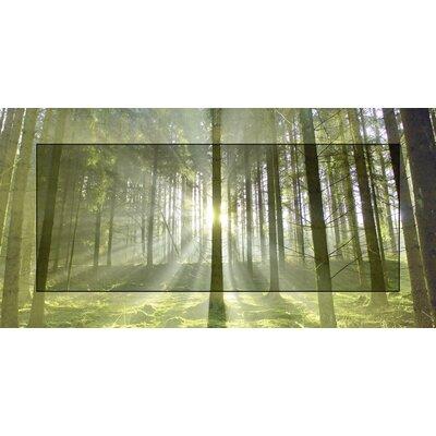 Artland Wandbild Wald im Gegenlicht von Körner, Hubert - 51,4 x 101,4 cm
