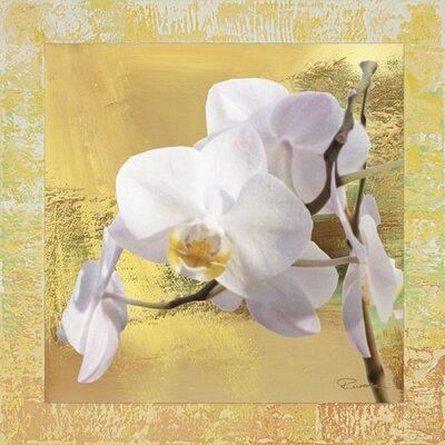 Artland Wandbild Weiße Orchidee I von Riweda - 62,4 x 62,4 cm