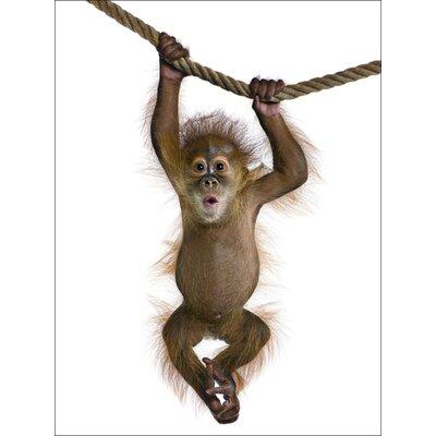Artland Leinwandbild Baby Sumatra Orang-Utan von Isselèe, Eric