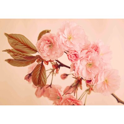 Graham & Brown Blossom Photographic Print on Canvas