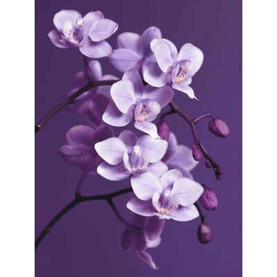 Graham & Brown Orchid Photographic Print on Canvas