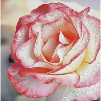 Graham & Brown Petal Rose Photographic Print on Canvas