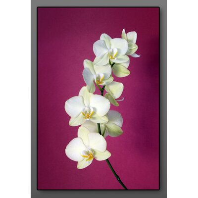 Graham & Brown Fuchsia Orchid Photographic Print on Canvas