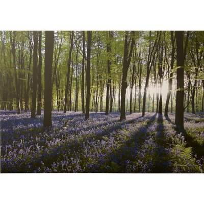 Graham & Brown Bluebell Landscape Photographic Print on Canvas