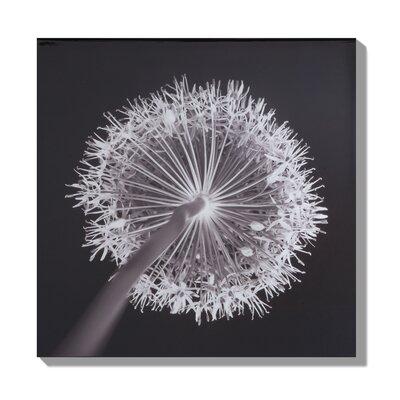 Graham & Brown Sepia Seduction Photographic Print on Canvas