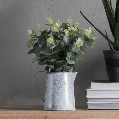 Gallery Euicalyptus Desk Top Plant in Pitcher