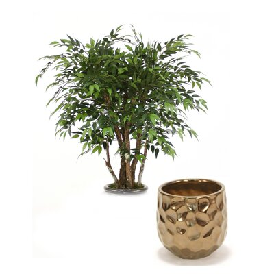 Ruscus Tree in Planter Base Color: Burnt Gold