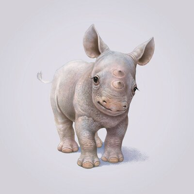 Art Group Rhino by John Butler Canvas Wall Art