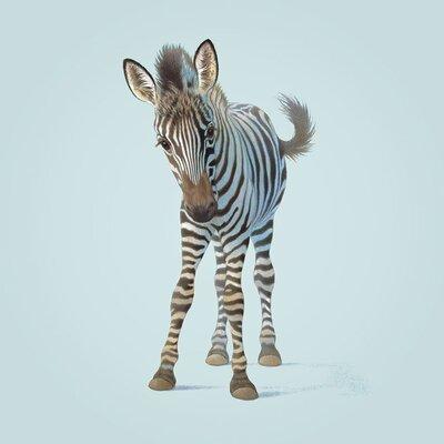Art Group Zebra by John Butler Canvas Wall Art