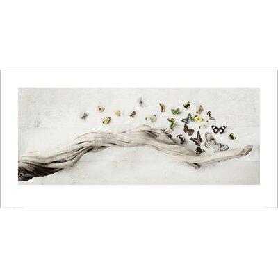 Art Group Drift of Butterflies by Ian Winstanley Graphic Art