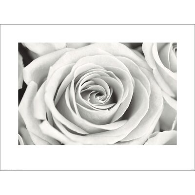 Art Group Rose by Frank Krahmer Photographic Print