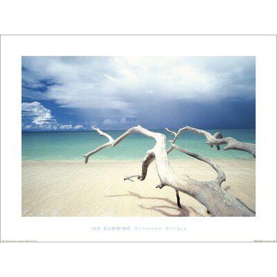 Art Group Driftwood, Antigua by Ian Cumming Photographic Print
