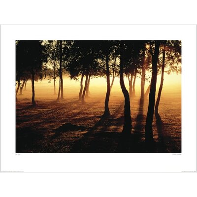 Art Group Mist and Sunlight by Jan Tove Photographic Print