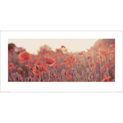 Art Group Field of Poppies by Ian Winstanley Photographic Print