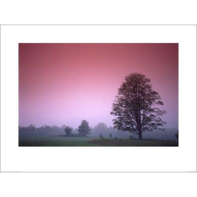 Art Group Maple Tree Photographic Print