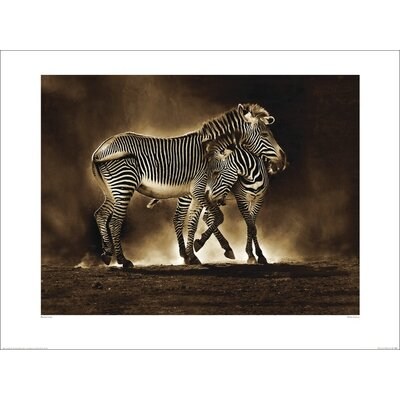 Art Group Zebra Grevys by Marina Cano Photographic Print