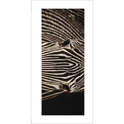 Art Group Zebra Grevy by Marina Cano Photographic Print