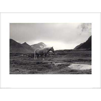 Art Group Grazing Together, Lofoten Islands by Andreas Stridsberg Photographic Print