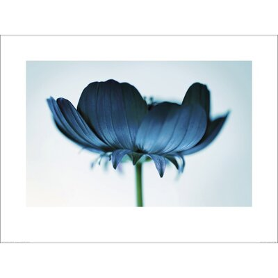 Art Group Japanese Anemone 3 by Ian Winstanley Photographic Print
