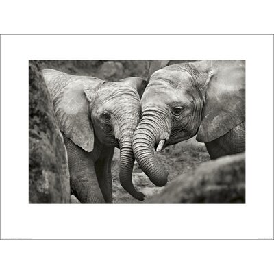 Art Group Elephants in Love by Marina Cano Photographic Print