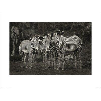 Art Group Zebras by Marina Cano Photographic Print