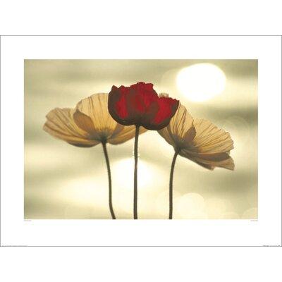 Art Group Icelandic Poppies by Yoshizo Kawasaki Photographic Print