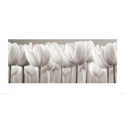 Art Group White Tulips by Ian Winstanley Photographic Print