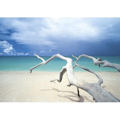Art Group Driftwood, Antigua by Ian Cumming Canvas Wall Art