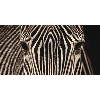 Art Group Zebra Grevy by Marina Cano Photographic Print on Canvas