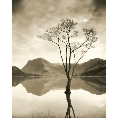 Art Group Silver Birch - Buttermere by Mike Shepherd Photographic Print on Canvas