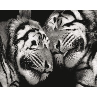 Art Group Sleeping Tigers by Marina Cano Photographic Print on Canvas