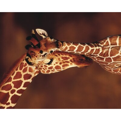 Art Group Giraffe by Karl Ammann Canvas Wall Art