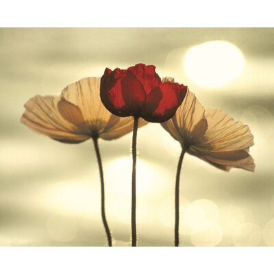 Art Group Icelandic Poppies by Yoshizo Kawasaki Canvas Wall Art