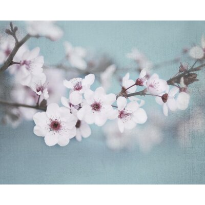 Art Group Plum Blossom by Shana Rae Photographic Print on Canvas