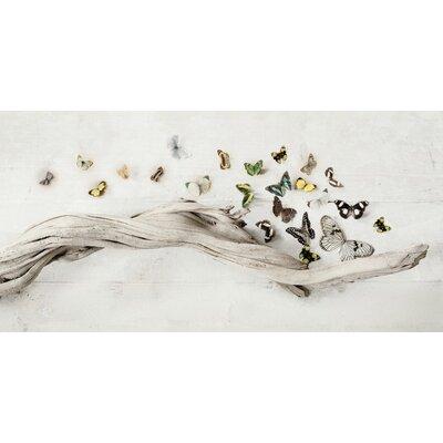 Art Group Drift of Butterflies by Ian Winstanley Canvas Wall Art