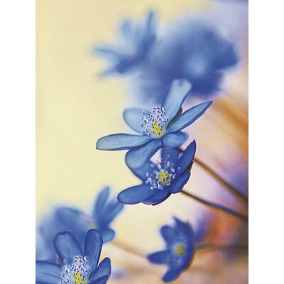 Art Group Hepatica Nobilis by Frank Krahmer Photographic Print on Canvas