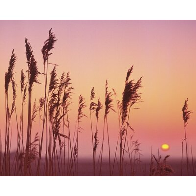 Art Group Fenland Sunrise by Rod Edwards Canvas Wall Art