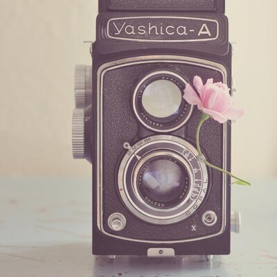 Art Group The Old Camera and the Rose by Yvette Inufio Photographic print on Canvas