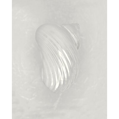 Art Group Pearl Silver Mouth Shell Back by Ben Wood Canvas Wall Art